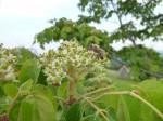 Bienenbaum (c) wüstengarten.at